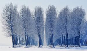 alberiridotta