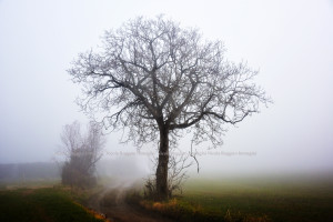 into the fog G3 90x60 web